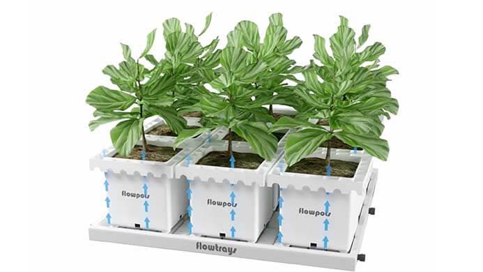 Innovagrow systems – la solución para cultivos intensivos